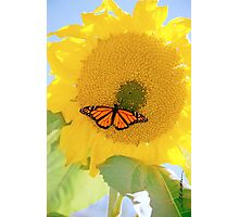 Monarch On the Sun Photographic Print