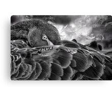 The Royal Mail Ship and Black Swan Canvas Print