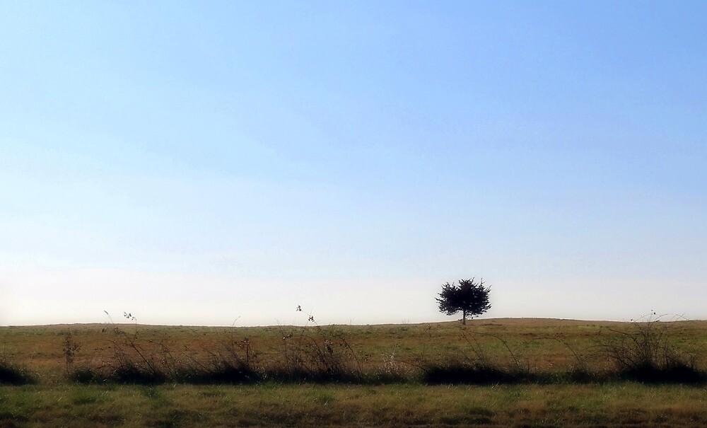 Alone by Carolyn  Fletcher