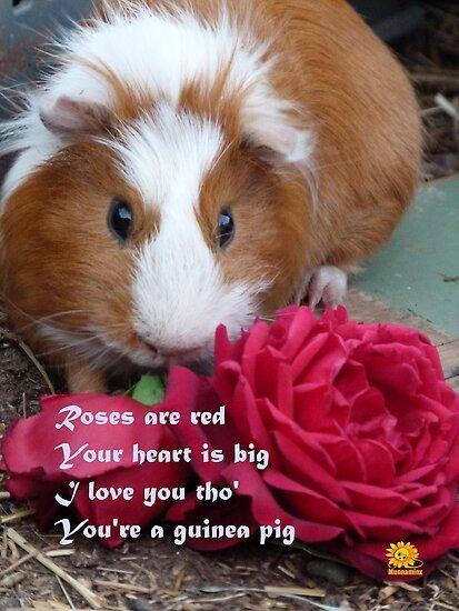 Guinea Pig Valentine by Anne van Alkemade