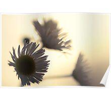 Flower Silhouette Sunset Poster