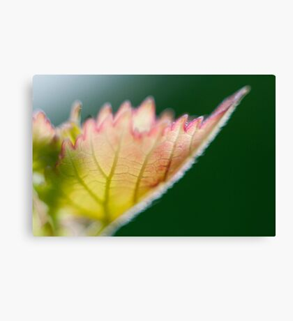 Macro Photography Leaf Canvas Print