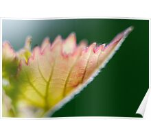 Macro Photography Leaf Poster