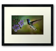 Hummingbird in flight Framed Print