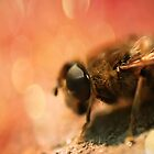 Bokeh Bee by Pancake76
