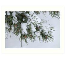 Snow falling on trees Art Print