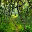 Blue Ridge - Hiking Trail Through Trees in Fog I by Dan Carmichael