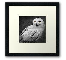 Snowy Owl Shrieks Framed Print