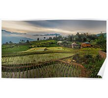 The Rice Terraces of Y Ty Poster