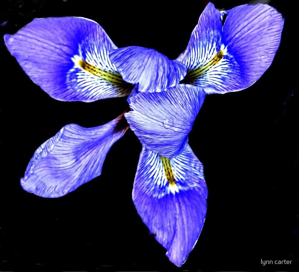Iris Foetidissima - Lyme Regis, Dorset. UK by lynn carter