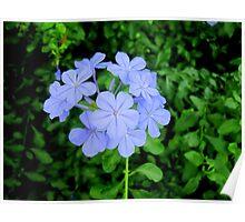 Purple Flower Bouquet  Poster