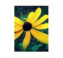 Gore Mountain Flower Art Print