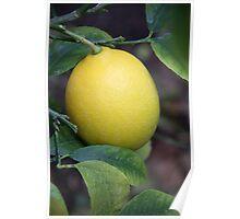 1st Photo of 2013-Lemon Poster