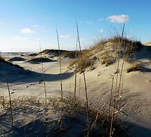 Sand dunes at Cape Hatteras by Alberto  DeJesus