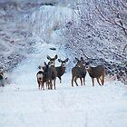 My Deer Family by Nicole  Markmann Nelson
