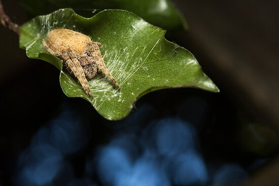 Spider by Colin  Ewington