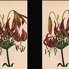 Turk's-cap Lily-Available As Art Prints-Mugs,Cases,Duvets,T Shirts,Stickers,etc by Robert Burns