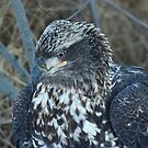Young Eagle 3 by Mike Shero