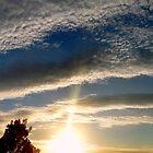 ©HCS Sunshine XII by OmarHernandez