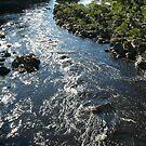 Rocky Crossing: Tayatea River, South Arthur Forest Drive, Tasmania, Australia by linfranca