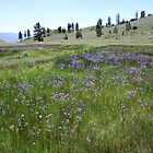Field of Purple Wildflowers,Peavine Mountain,Reno Nevada by Anthony & Nancy  Leake
