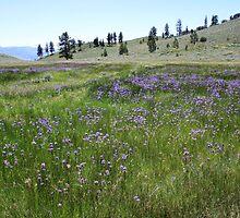 Field of Purple Wildflowers,Peavine Mountain,Reno Nevada by Anthony & Nancy  Leake