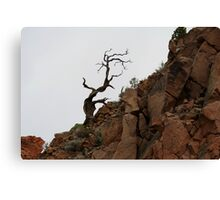 lonely tree in the rocks,near Pyramid Lake,Reno Nevada USA Canvas Print
