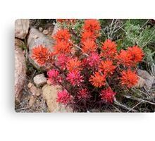 desert wildflowers,reno nevada,usa Canvas Print