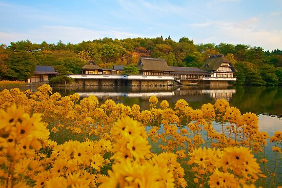 Komaki Onsen with Daisies by Marc Maschhoff