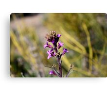 purple desert wildflower,Reno Nevada USA Canvas Print