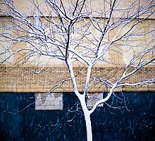 Brooklyn Walls by AbeCPhotography