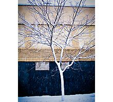 Brooklyn Walls Photographic Print