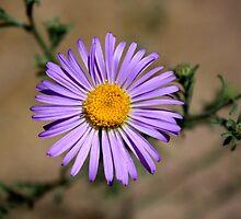lone desert flower by Anthony & Nancy  Leake