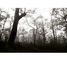 Porongurup Mist Photographic Print