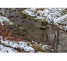 Winter Stream Photographic Print