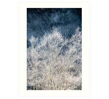 Frosted Trees Art Print