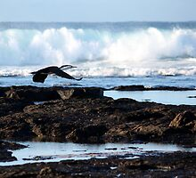 Bird Flat Rock - Skennars Head NSW (near Ballina) by OzNatureshots