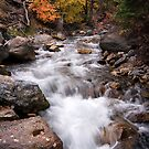 Autumn Stream 4 by David Kocherhans
