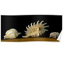 Three Shells 2 Poster