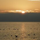 ducks at dusk by alamarmie
