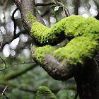 Moss by Em Donaldson
