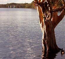 Lake Ainsworth - Lennox Head NSW by Emmy Silvius