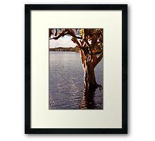 Lake Ainsworth - Lennox Head NSW Framed Print