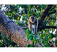 SHADY MONKEY! Photographic Print