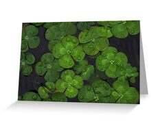 Water Lilly Zen Greeting Card