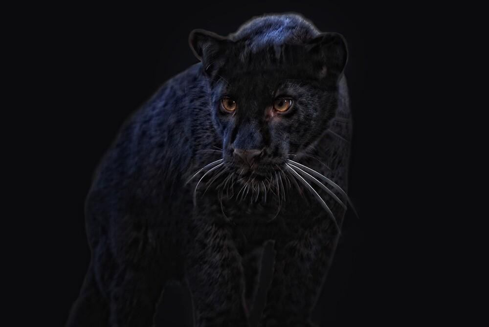 Little Black Jag by Jo-PinX