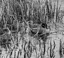 Resting In The Reeds by EvilTwin