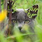 Camo Kitty by Shaun Colin Bell