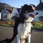Laddie at large. by Michael Haslam