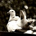 White Dove Tail by NestToNest